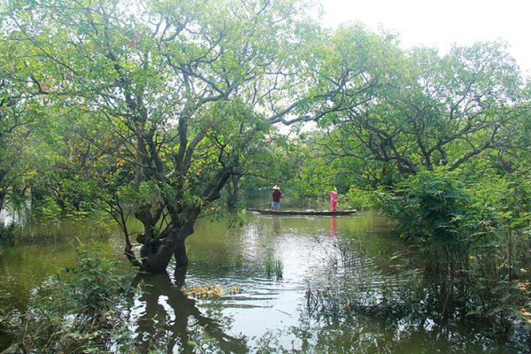 Rừng Lộc Vừng 400 Năm Tuổi Tại Quảng Bình